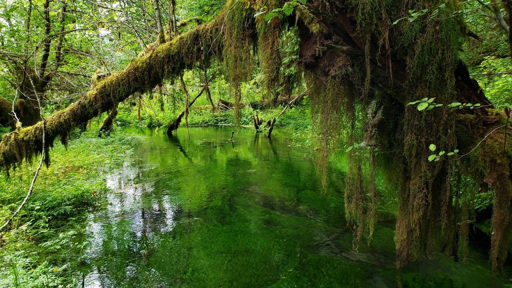 port-angeles-washington-vacation-rental-olympic-national-park-hoh-rainforest